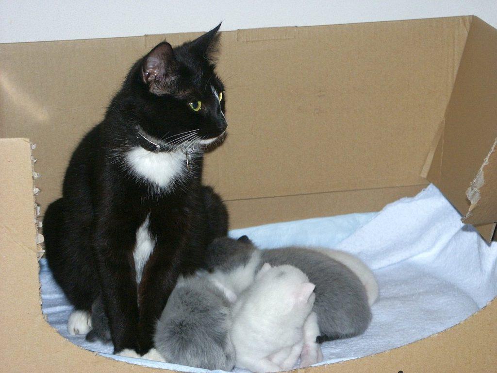 Nu ook overlast van kattenpoep sterrenburg for Kattenpoep in de tuin